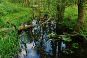 Wiosna w rozlewiskach Rzeki Czarnej
