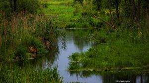 Rzeka Czarna wiosną