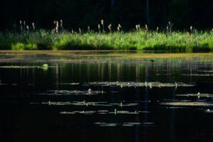 jezioro czarne2